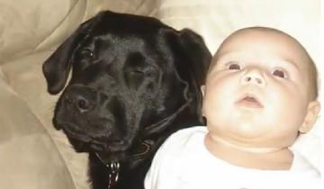 Когда женщина решила завести собаку, ее отговаривали
