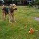 Собака и игрушечный хомяк: вот это реакция!