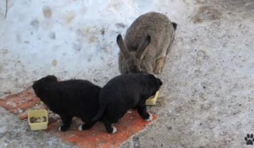 Кролик сбежал из дома, чтобы в итоге спасти щенков