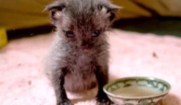 Увидев этого котенка впервые, девушка приняла его за… крысу