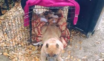 Мужчина завел собаку для разведения щенков. Но та не беременела