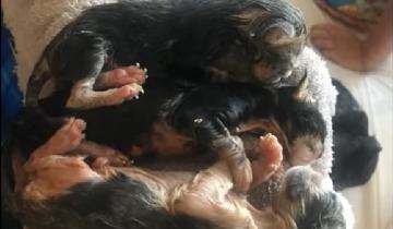 Женщина подобрала новорожденных котят. Но один едва не погиб