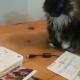 Уморительная подборка о котах собрала 5 млн. просмотров