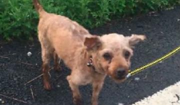 Владельцы с радостью продали 11-летнего пса мясной ферме