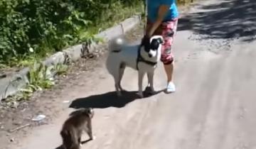 Эти невероятные коты: степень бесстрашия зашкаливает