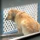 Хозяева посадили пса на короткую цепь. Вместо намордника — скотч