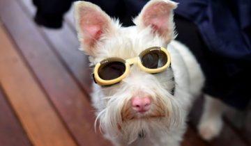 Необычного щенка хозяева сдали в приют: мол, бракованный
