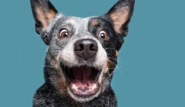 Фотограф снимает собак, чтобы показать, как они уникальны