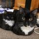 Милые котики и их миниатюрные копии