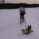 Самый ленивый лыжник на свете — пес стал звездой интернета