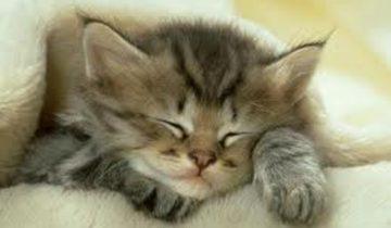 Мама-кошка, которая прогоняет плохой сон, собрала 2,6 млн. просмотров
