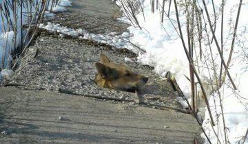 Волонтеры увидели страшную картину: из бетонной дыры торчала голова собаки