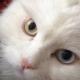 Кот, забитый, «как половая тряпка», обрел любящих хозяев и… братика