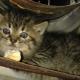 Маленький котенок отчаянно шипел и не подпускал к себе людей