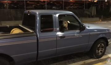 Пес сидел спокойно в авто, а потом будто сошел с ума