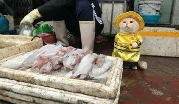 Самый очаровательный продавец рыбы взорвал интернет снимками