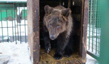 Медвежонок родился плохим актером. Но в этом его счастье!