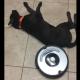 Ленивая собака и робот-пылесос: кто кого?