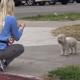 Собака была голодна и ранена, но она не сдавалась до последнего