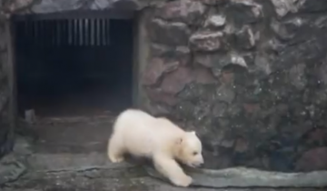 Николаевский белый медвежонок стал героем