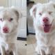 Милые, смешные и самые любимые: фотоподборка собак