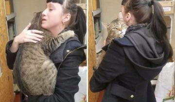 Огромный кот вцепился в девушку и уже не желал отпускать