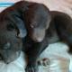 Москвич нашел в мусорном баке живых медвежат
