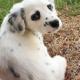 Этот пес признается в любви хозяйке одним своим видом