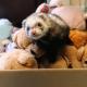 Женщина выносила из гаража коробку с игрушками, как вдруг одна шевельнулась
