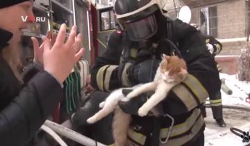 Кошечка надышалась дымом и чуть не погибла в пожаре