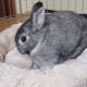 Хозяин решил поиграть с кроликом, но у него другие планы