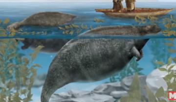 15 животных, которые исчезли по вине человека