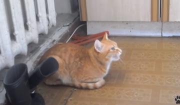 Рыжий котейка старательно подпевает своему владельцу