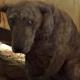 Женщина обнаружила в сарае собаку с кровавой полосой на шее