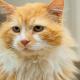 Кота отдали в другую семью: «Надоел!» А когда он вернулся, решили его усыпить