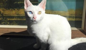 ТОП-3 редчайших пород кошек
