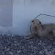 Раненый шарпей жил на железнодорожных путях. А спасение его стало опасным