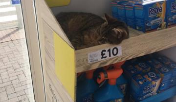 Кому кота?! Мурлыка заснул прямо за ценником