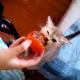 Котик — поедатель хурмы! Наверное, ему чего-то не хватает