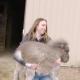 Мини-пони родился больным: практически не мог ходить