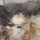 5 лет в тесной клетке: в этом существе сложно было узнать кота