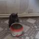 Чудо, а не кошка: левша, которая пьет воду лапкой