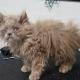 Котенок-совенок: таким его нашли. Но посмотрите, каким он стал!