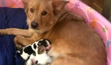 Когда собака родила щенков, казалось, что ей их подкинули