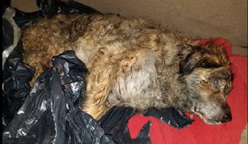 Когда пса нашли в мусорном пакете, оказалось, что он пробыл в нем не меньше недели