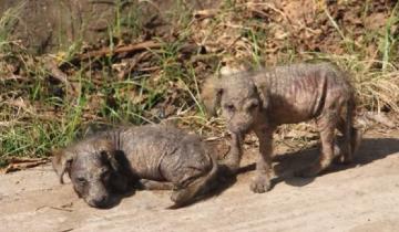 У них никого не было, кроме друг друга: 4-недельные щенки выживали, как могли