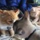 Простое счастье кошачьего семейства собрало 2,2 млн. просмотров
