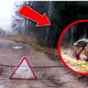 7 мутантов Чернобыля: правда или фейк