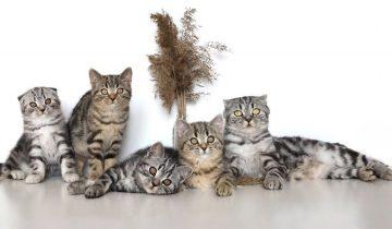 Девушка снимает потрясающие ролики с котятами