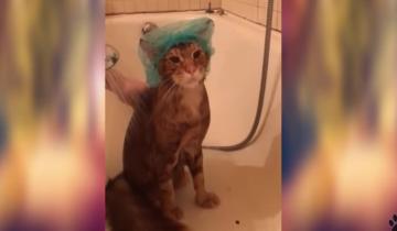 Идеальное купание кота: кто не мечтает о таком